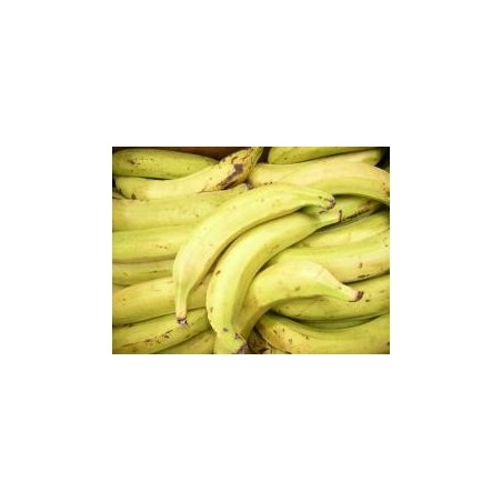COLOMBIA GREEN PLANTAIN